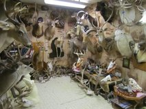 Taxidermy services in Fort Polk, Louisiana